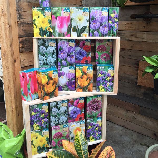 Shop Our Selection Of Flower Bulbs In The Outdoors Department At The Home  Depot.