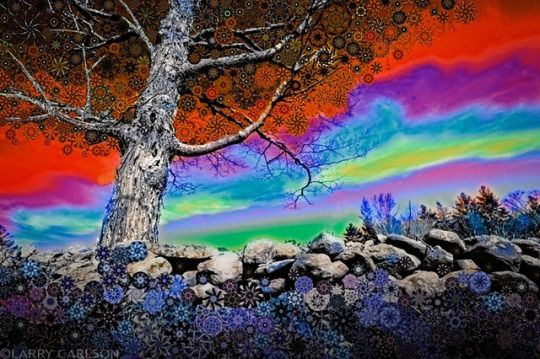 THE WONDERFUL WORLD OF LARRY CARLSON