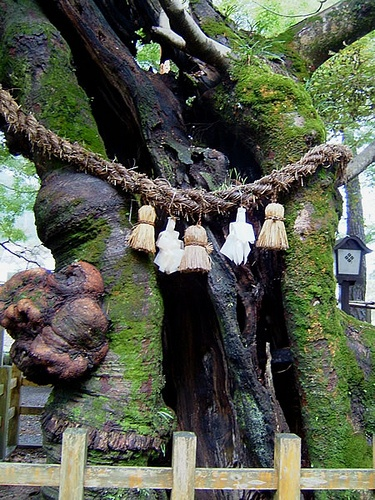 Tsuwano - Shimenawa (rope) is placed in a scared area according to Shinto belief.**