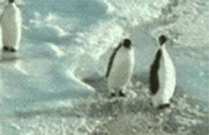 Those damn penguins... - Imgur
