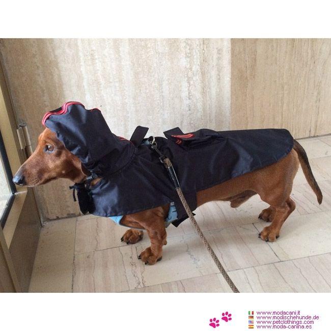 Impermeabile Blu Scuro per cani di taglia piccola #ModaCani #Bassotto - Impermeabile per cani di taglia piccola, colore Blu Scuro in vendita online: facile da far indossarea al cane, perchè non ha maniche, ed è con strap