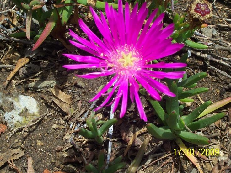 Una flor que aporta color