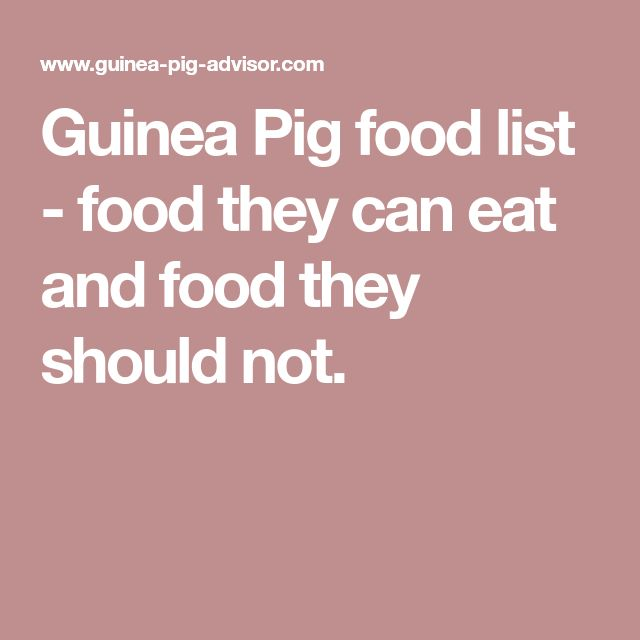 Guinea Pig food list - food they can eat and food they should not.