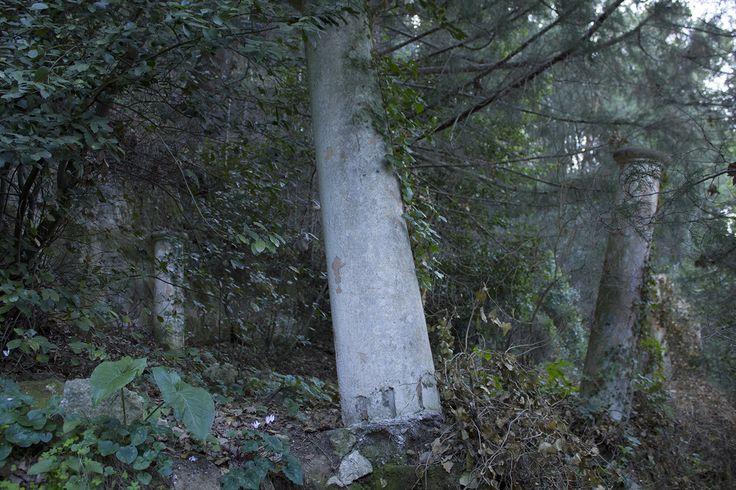 Columns in nature, Rhodes Greece