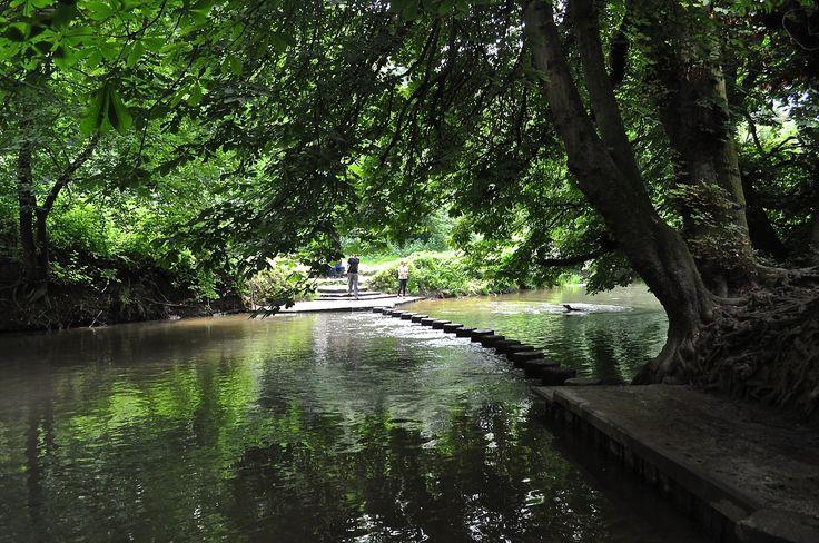 Box Hill Stepping Stones, Surrey, England