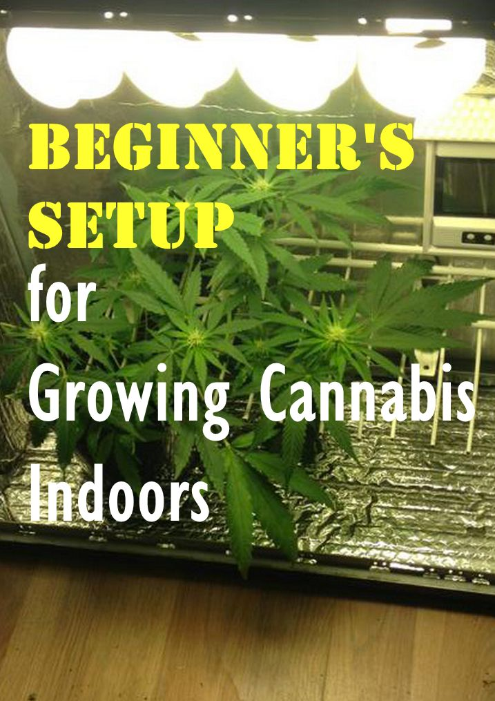 Beginneru0027s Setup For Growing Cannabis Indoors