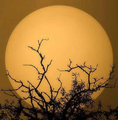 moon goodnight