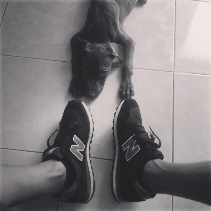 Hi! I'm Mylo Xyloto #pitbull #dog #puppy #pet #myloxyloto