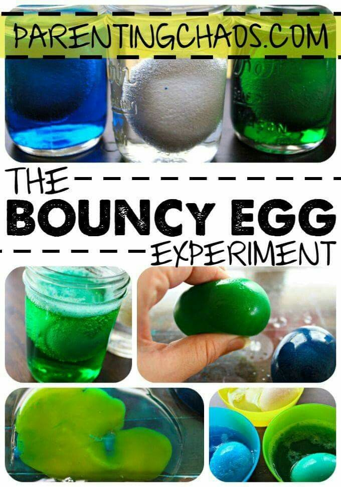 The Bouncy Egg Experiment For Kids Pinterest The O