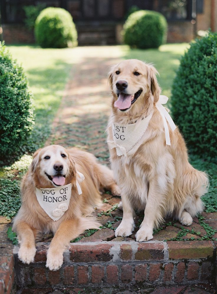Dog of Honor and Best Dog | Featured on Cottage Hill | Photography by Anne…