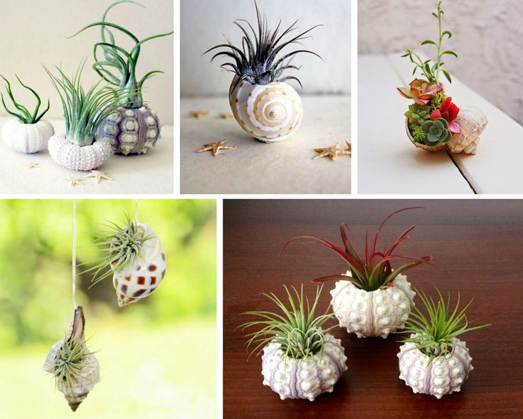 26 best images about decorazioni con le conchiglie for Decorazioni con conchiglie