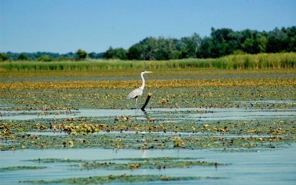 Lake Tisza, Hungary   2012