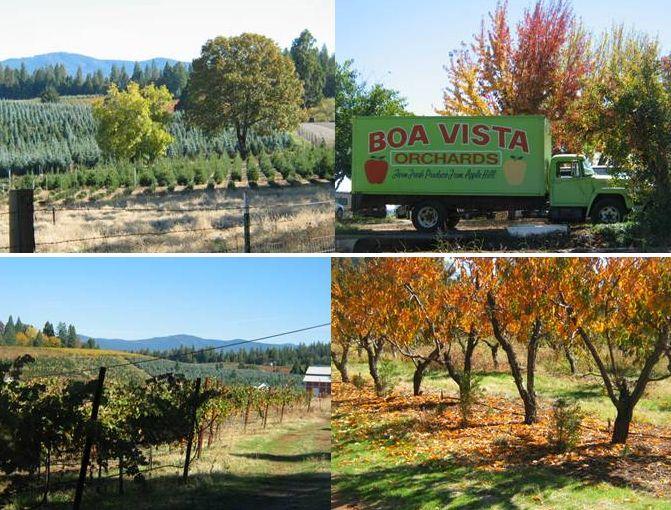 216 Best Apple Hill California Love Love Love Images On