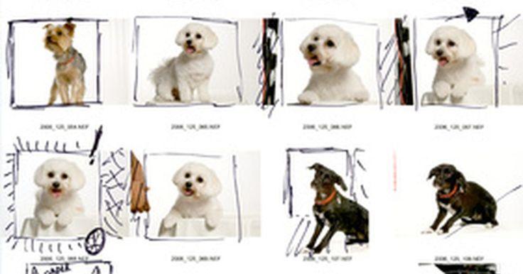Cómo imprimir una fotografía con un nombre de archivo. Imprimir fotografías digitales con nombres de archivo puede ayudar a los fotógrafos a identificar archivos de imagen rápidamente. Esto es útil si imprimes grupos de fotografías para una presentación a un cliente de fotografía o vas a dar a miembros familiares opciones de retratos y fotografías instantáneas para que sean impresas. Para imprimir ...