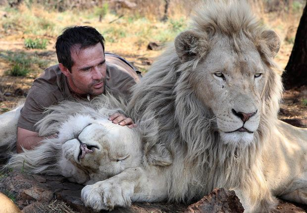 The Lion Whisperer: Kevin Richardson plays with white lions at a game park in South Africa