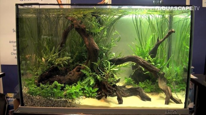 Aquascaping Aquarium Ideas from Aquatics Live 2012 part ...