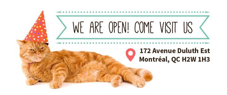A-meowzing! Gotta visit this cafe next time! : Café Chat L'Heureux - Happy Cat Cafe Montreal
