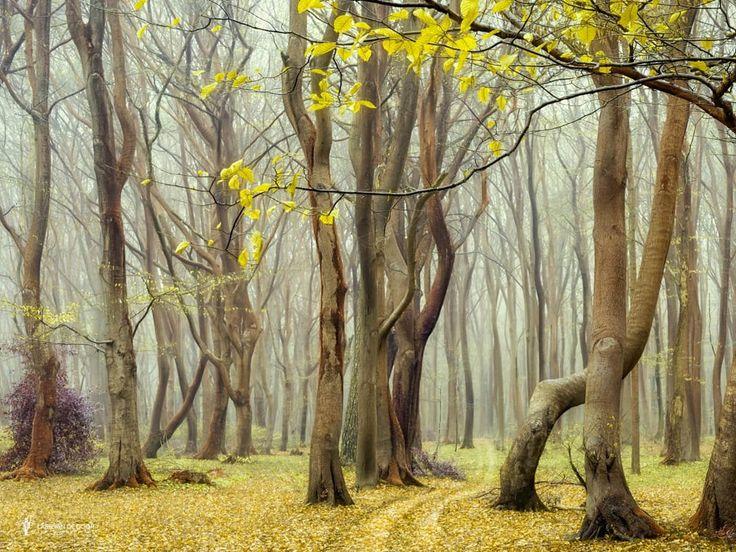 Hidden Speul II by Lars van de Goor on 500px