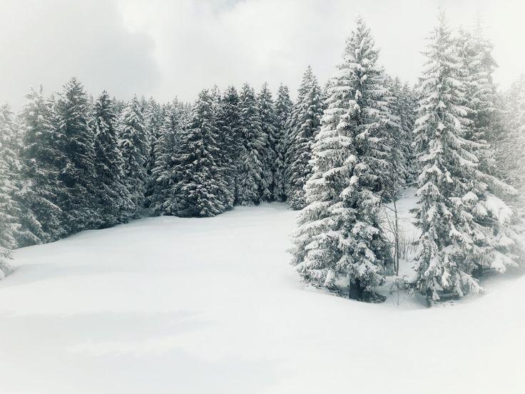 Forest in the alps. @Grindelwald #forest #switzerland #grindelwald