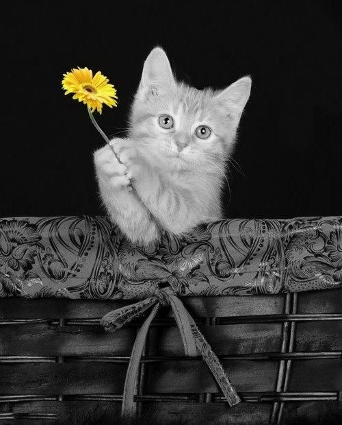 I haz a flower... Aahh what a cute kitty and such cute English too! I suppose the single yellow flower justifies for this cutie to be pinned onto this board!
