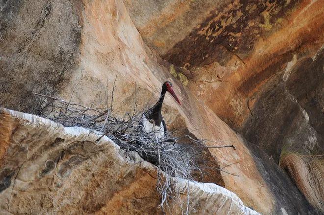 """""""Ez a madár nézett ránk az egész nap, amikor jöttünk, hogy kóstolja meg a festmények,"""" Bonneau mondta."""