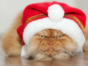"""Conheça o gato mais """"mal humorado"""" do mundo - Curtir Espetacular"""