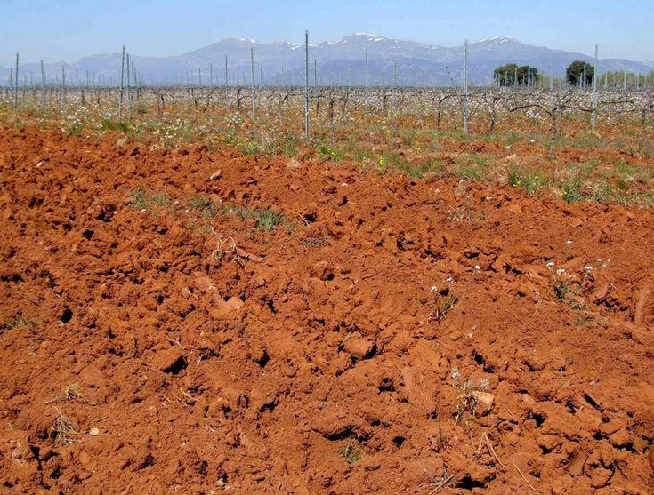 Cómo cambiar el pH del suelo - https://www.jardineriaon.com/cambiar-ph-del-suelo.html #plantas