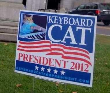 Vote For Meow: The Top 10 Cat Election Candidates...see more at PetsLady.com -The FUN site for Animal Lovers