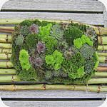 grafstuk met chrysanten en vetplanten