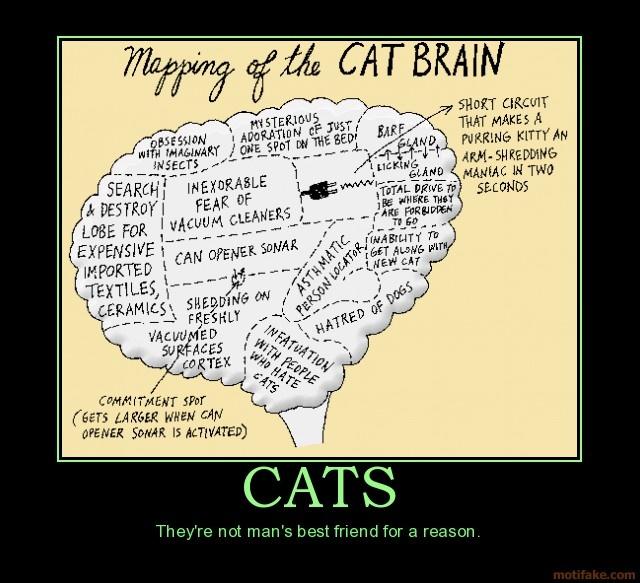 cat brain