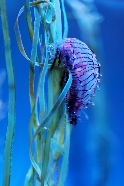 beautiful sea creature, purple, green sea snail