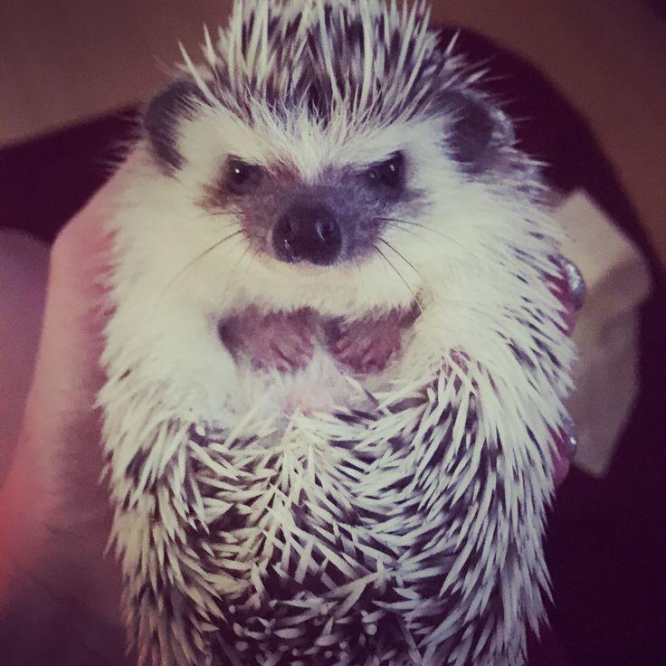 Nasranej ježek :-D Angry hedgehog :-D