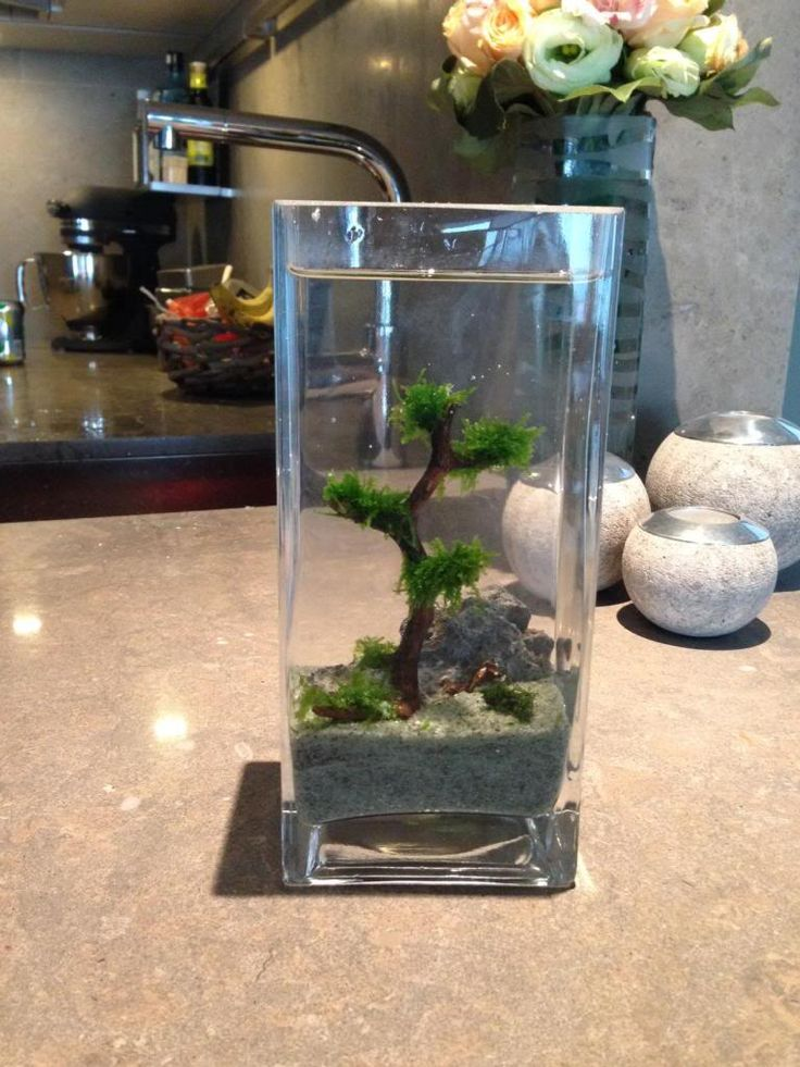 Top 25 best vase fish tank ideas on pinterest betta for Betta fish tank with filter
