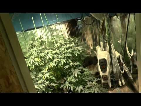 Clean Light,  LEDs & Medi One  100% Organic Growing