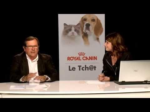Comment nourrir un chaton ? - Animaux - YouTube