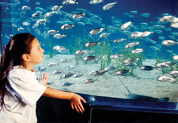 On hot days when you would like to stay close to sea life, but escape the beating sun visit the Maritime Aquarium in Norwalk, Connecticut! #aquarium #fish #maritime #ct #norwalk #jeanbailey #summer #sea #ocean #fish #fun #family http://connecticutliving.net/jeannebailey/2013/07/maritime-aquarium-norwalk-connecticut/