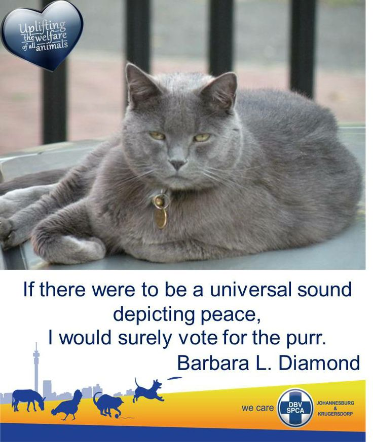 """""""If there were to be a universal sound depicting peace, I would surely vote for the Purr."""" Barbara L. Diamond"""