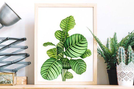Affiche Calathea Aquarelle Botanique Aquarelle Plante Affiche