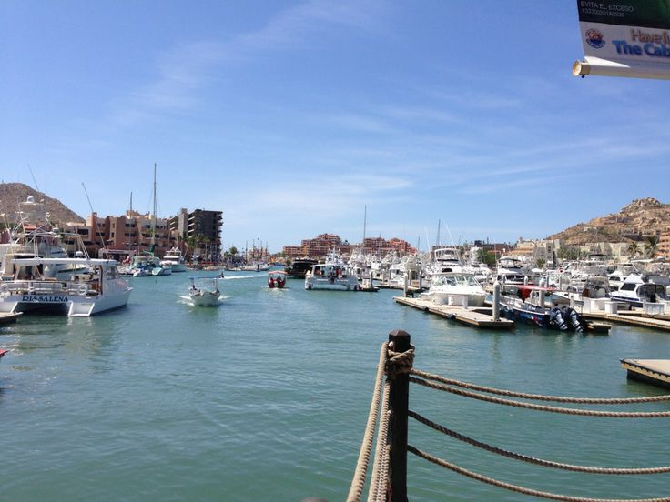 http://www.bajaraiders.com/ Look for Baja Raiders on the Marina to get the BEST fishing experience in Cabo.