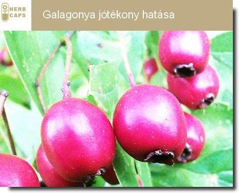 Galagonya jótékony hatása | Herb Caps | kapszulába zárt egészség