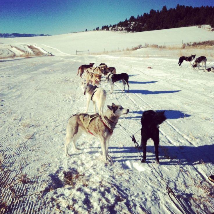 Flathead Sled Dog Days
