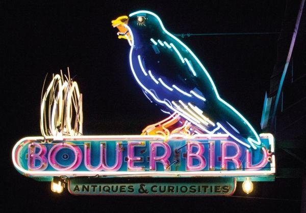 Bower Bird Antiques & Curiosities, San Marcos, Texas