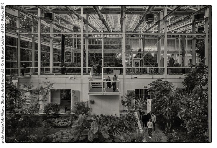 https://flic.kr/p/K3yVLo | Il Giardino della Biodiversità, Orto Botanico Università di Padova fondato nel 1545 - Padova 2016