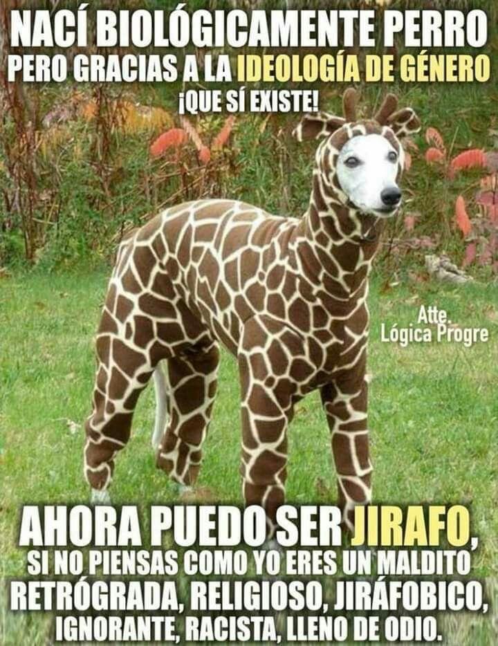 Pin De Nonigeta98 En Memes Disfraz Para Perros Halloween Perros Pijamas Para Perros