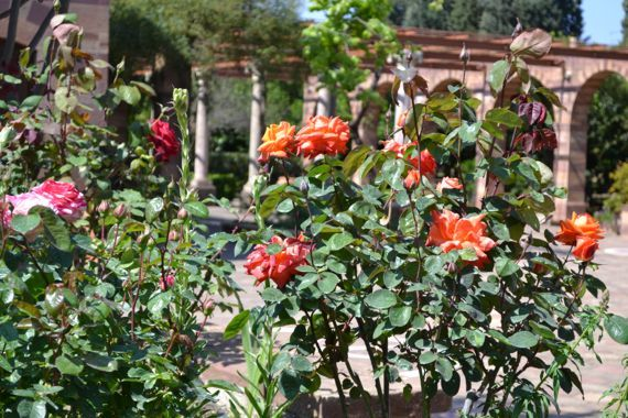 Argentikon: The Gardens