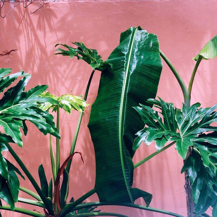 Pflanzengrün und sattes Pink #pflanzenfreude
