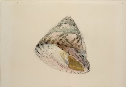 """John Ruskin """"Small Things Closely Observed"""""""