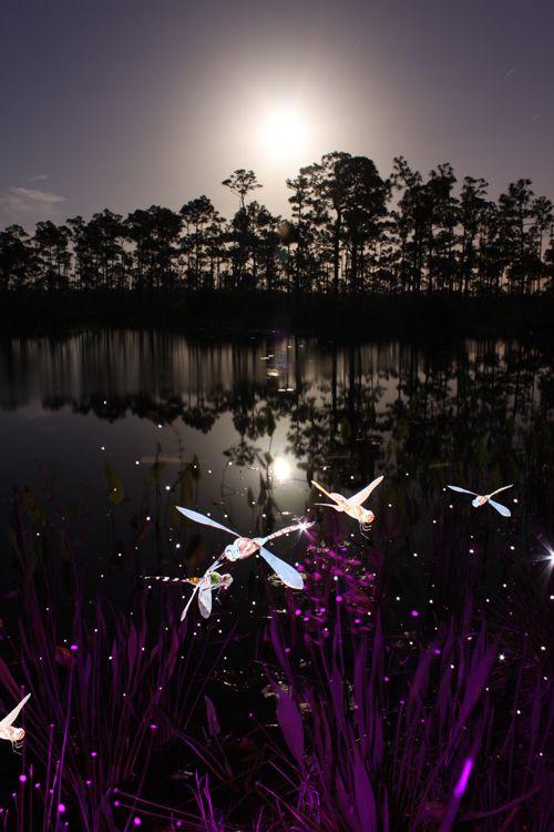 Jason-D.-Page-Light-Painting-Dragonflies-5.jpg (500×750)