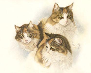 Kat drieluik by Francien Van Westering