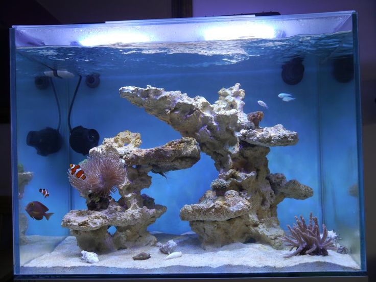 Ash's Clearseal Reef Space 700 (70x50x50cm) - 2nd marine tank! - Page 2 - UltimateReef.com